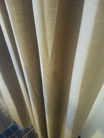 Homewood Suites by Hilton Columbia: Numerous dirty spots on curtains