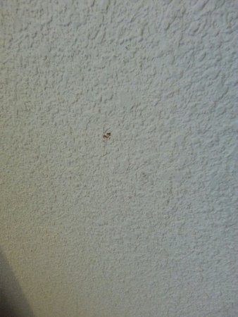 Homewood Suites by Hilton Columbia: Bloody booger or food on bedroom wall rm 301