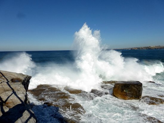 Bondi to Coogee Beach Coastal Walk : wave