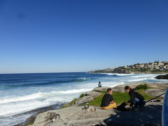 Bondi to Coogee Beach Coastal Walk : beach