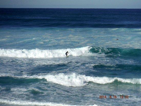 Bondi to Coogee Beach Coastal Walk : surfer