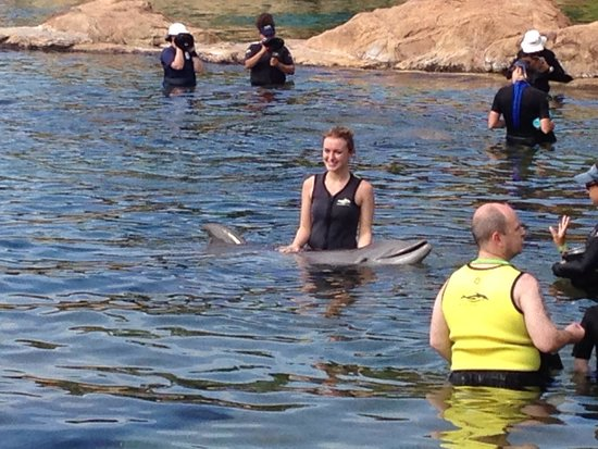 Discovery Cove: Swimming with dolphins