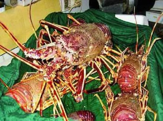 Ristorante L'Aragosta : aragoste vive