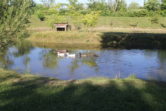 Chalet Bed and Breakfast: Pond View