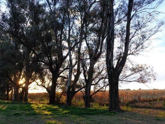 Estancia San Patricio: Surrounding countryside