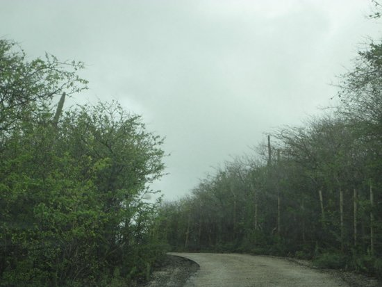 Mount Christoffel: Trilha Carro