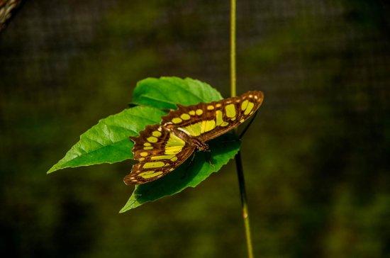 Butterfly Conservatory:  103017009Malchite