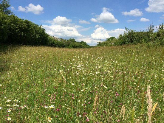 Heart of Burren Walks: Meadows filled with wildflowers