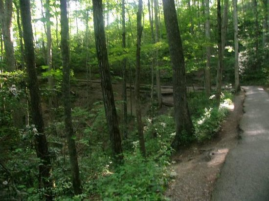 Laurel Falls: The Path