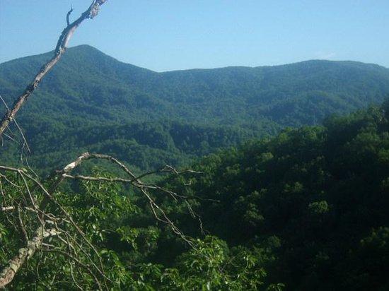 Laurel Falls: View