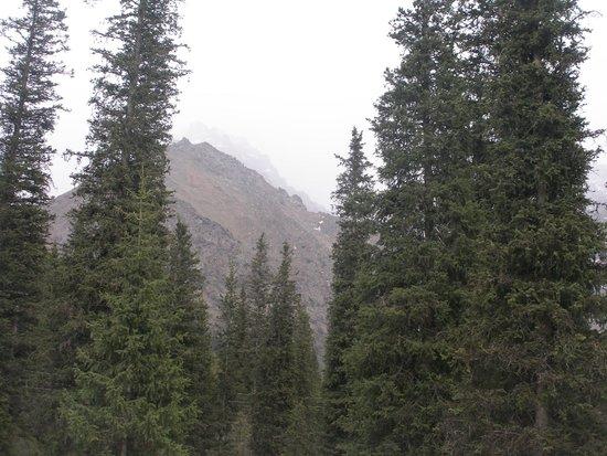 Ala-Archa Gorge: arboleda