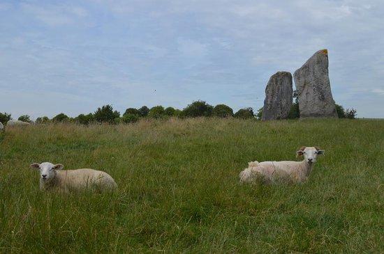 Ye Olde England Tours: Avebury standing stones