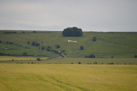 Ye Olde England Tours: White horse