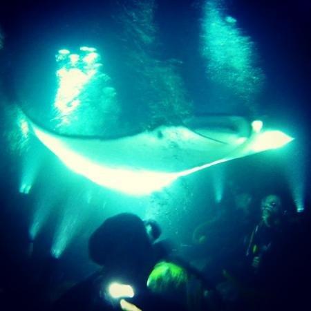 Big Island Divers : manta!