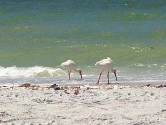 West Wind Inn : wildlife on the beach