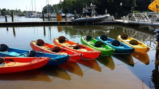 Kayak Annapolis LLC: The tandem kayaks all lined up