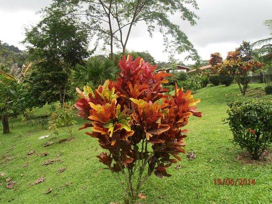 Volcano Lodge & Springs: jardines