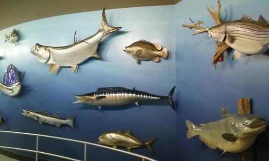 Go Fish Education Center: Wall fish