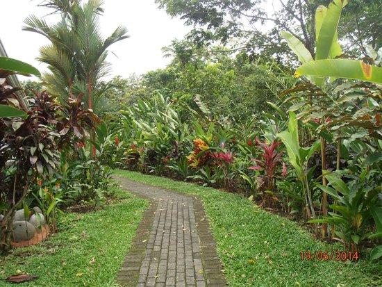 Volcano Lodge & Springs: senderos