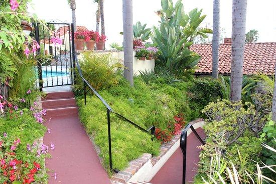 Casa Laguna Hotel & Spa: Pool area and foliage below