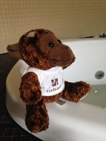 Rydges St Kilda: Urban monkey likes to watch.
