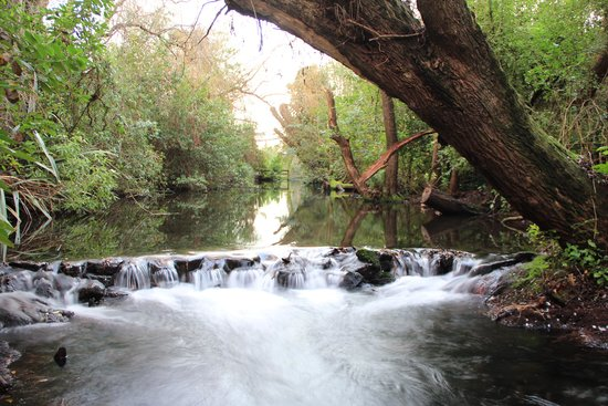 Willowbank Wildlife Reserve: A small river flowing through the entire reserve