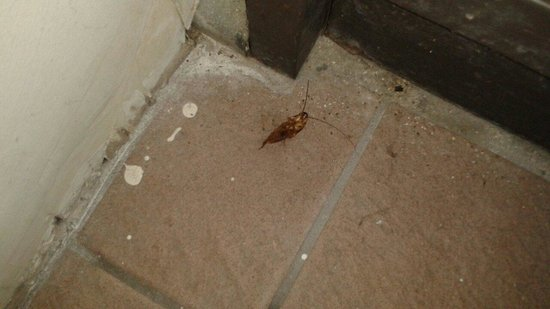 Clarion Hotel: Dead cockroach in stairwell