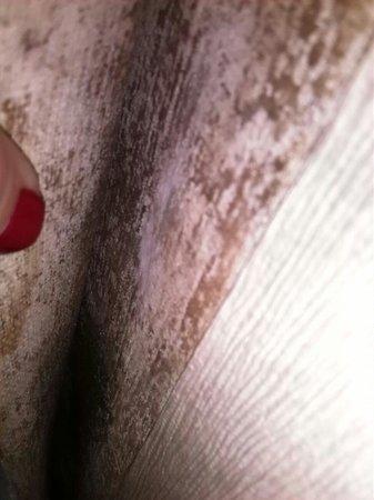 Howard Johnson Hotel - Toms River: Black mold behind peeling wallpaper