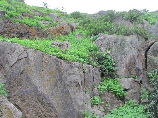 Reserva Nacional Lomas de Lachay: Precipicio de Piedras