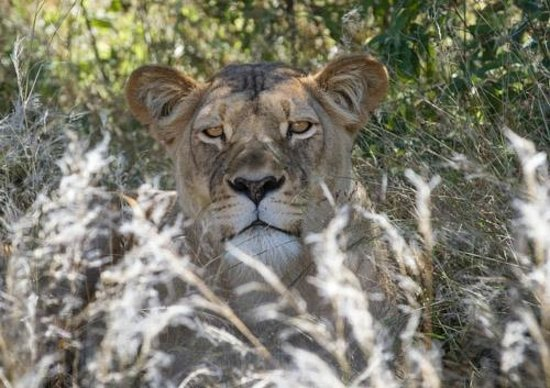Dinaka Safari Lodge: Who's looking at whom