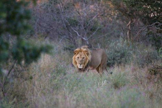 Dinaka Safari Lodge: Just strolling by