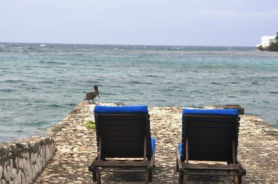Round Hill Hotel & Villas: Jamaica