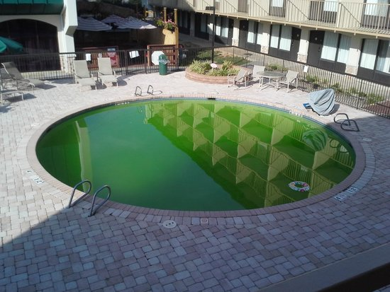 Clarion Hotel Richmond Central : They did close the gate when the pool turned gross.
