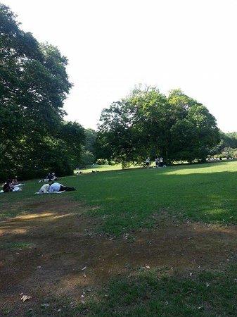 Shinjuku Gyoen National Garden: Park