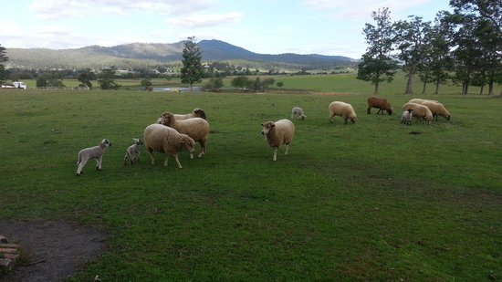 Clandulla Cottages Farmstay Beautiful Sceneries Farm Animals