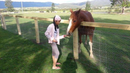 Clandulla Cottages, Beaudesert: pretty farm horse