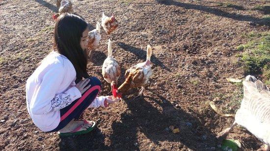 Clandulla Cottages, Beaudesert: happy feeding..