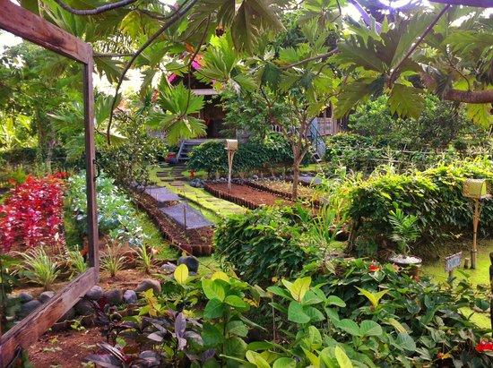 Desa Seni, A Village Resort: gardens
