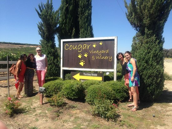 Grapeline Wine Tours: Cougar winery love the name