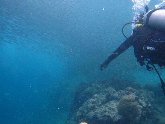 Cebu Dive Centre: Sardine Run!!!