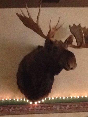 Buckhorn Steak and Roadhouse: Moose