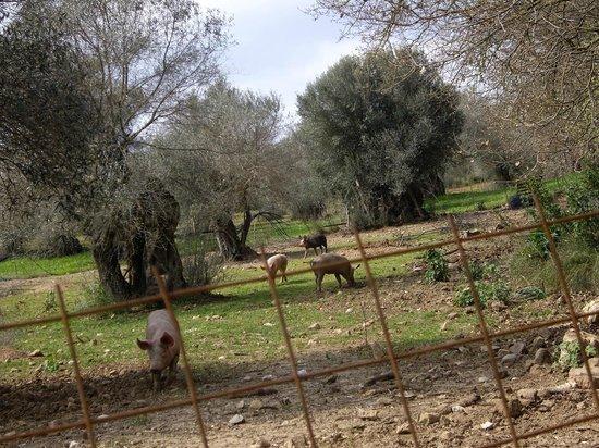 Akrovatissa: η φάρμα μας/ our farm