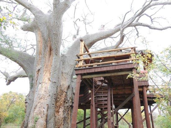 Tarangire Treetops : Lodge Nr. 5