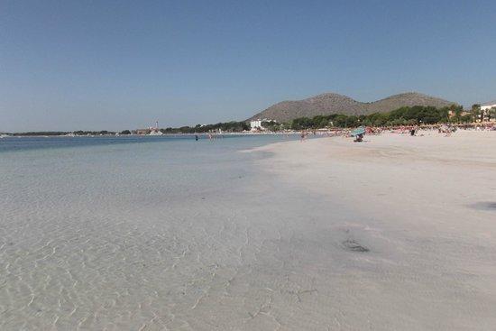 Eix Lagotel : Alcudia beach