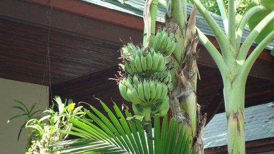 Banana Fan Sea Resort: Hotel area