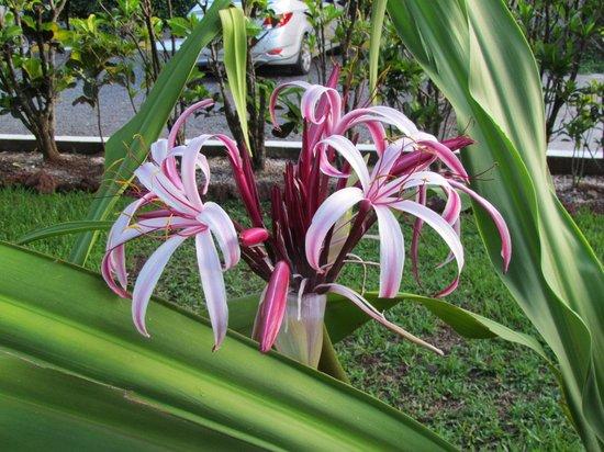 Hotel La Rosa de America: Beautiful gardens