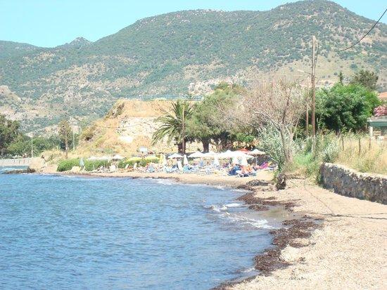 Alma Hotel: strandje behorende bij het resort