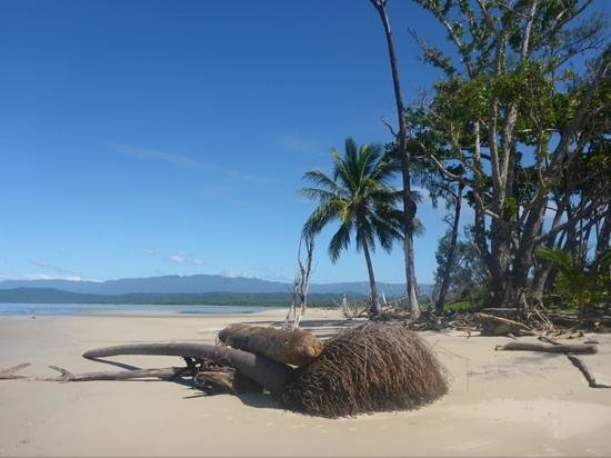 The Daintree River Mouth Picture Of Koala Beach Resort