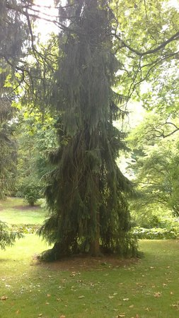 National Botanic Gardens: One of the beautiful trees to be seen, over a hundred years old