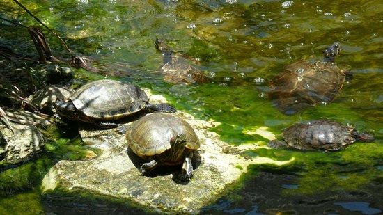 Iberostar Quetzal Playacar : Main Pool